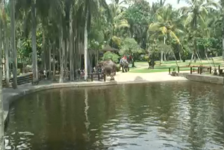 Webcam Indonesia, Bali, Elephant Park, Pool for Elephants